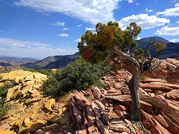 Hollow Rock Scenery Red Rock Canyon